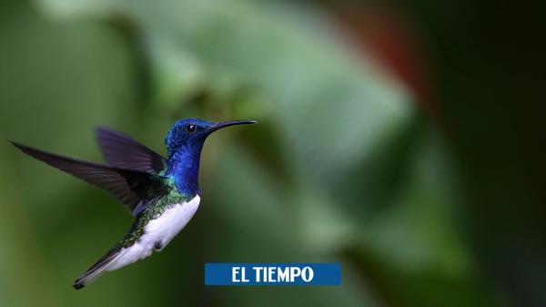 Últimas actividades de la Feria de las Aves Colombia Birdfair 2020