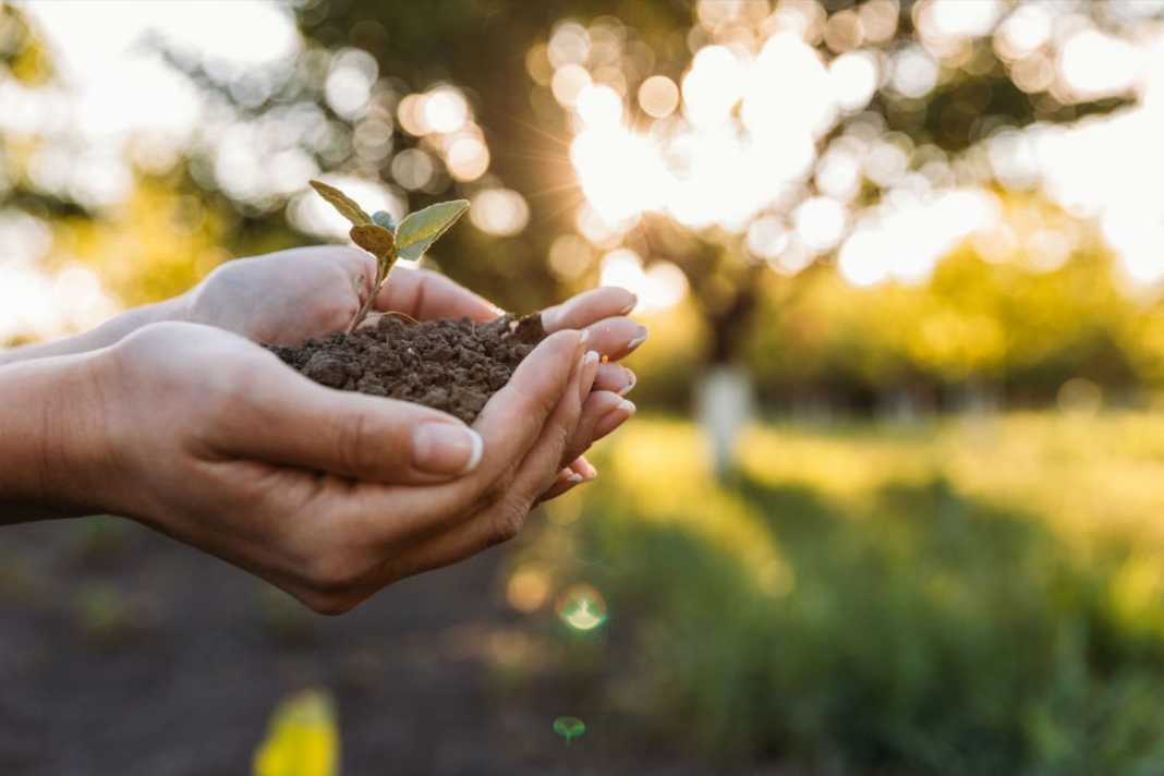 ¿Cómo emprender y ayudar al medio ambiente?