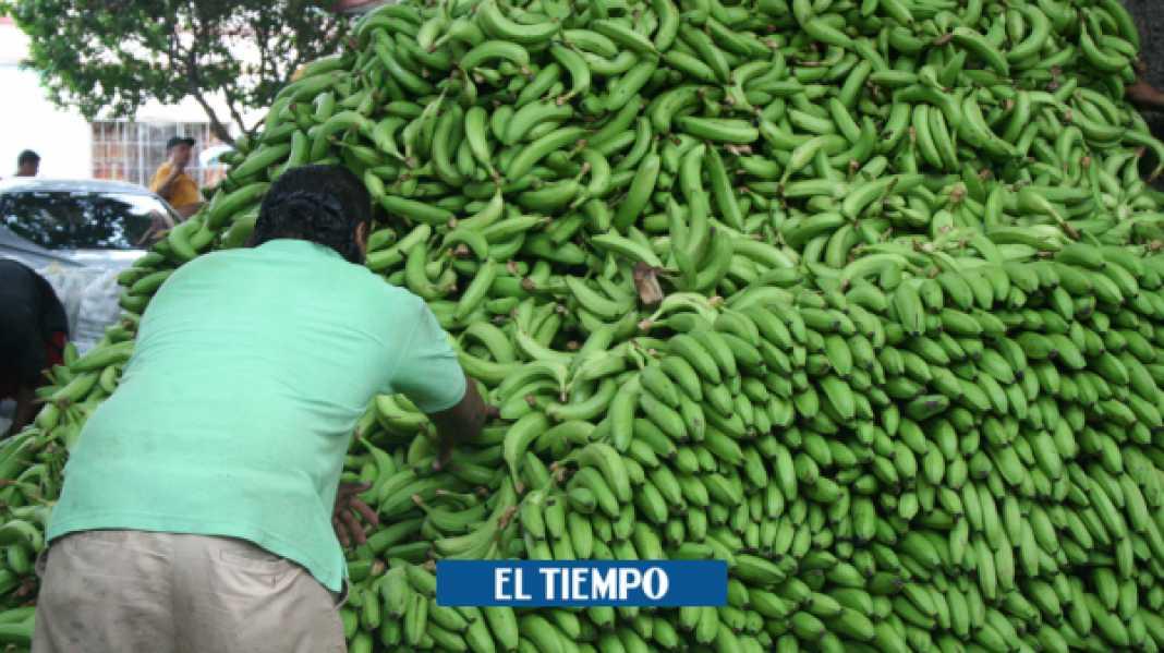 El mote de guineo verde, el plano que se puso de moda con el coronavirus - Barranquilla - Colombia