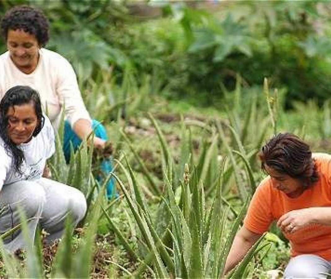 Incentivos del Gobierno para las mujeres rurales - Gobierno - Política