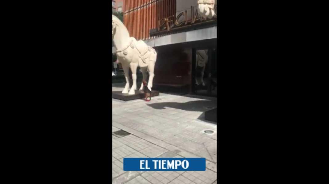 La reacción del perro del exalcalde Enrique Peñalosa por cierre de restaurante - Partidos Políticos - Política