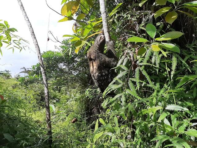 8 Animales Silvestres Fueron Rehabilitados En Su Entorno Natural   Noticias de Buenaventura, Colombia y el Mundo