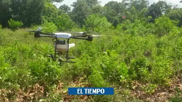 Primero sustitución de coca que erradicación en Cauca: Tribunal - Cali - Colombia