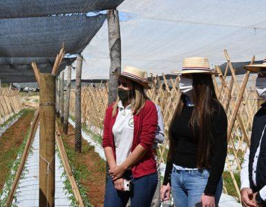 Experimentan con tecnología de precisión para agricultura familiar - Económico
