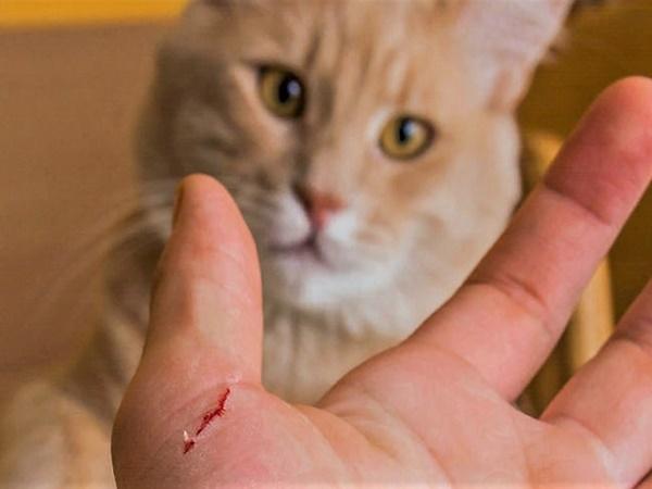Declaran alerta roja luego de que una mujer muriera por mordedura de un gato