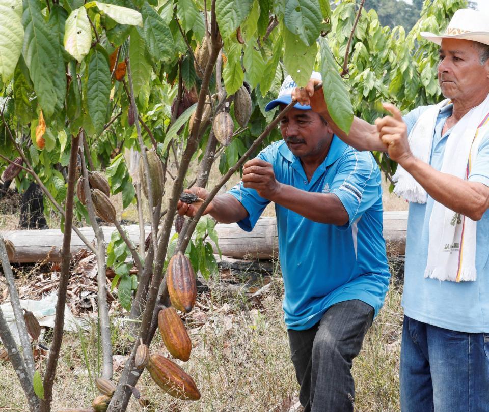 Sustitución de cultivos: lanzan alerta por falta de recursos - Proceso de Paz - Política