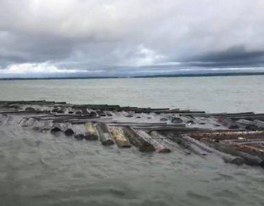 Madera ilegal en Buenaventura