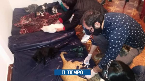 Aparecen nueve gatos afectados por envenenamiento en Pasto - Cali - Colombia