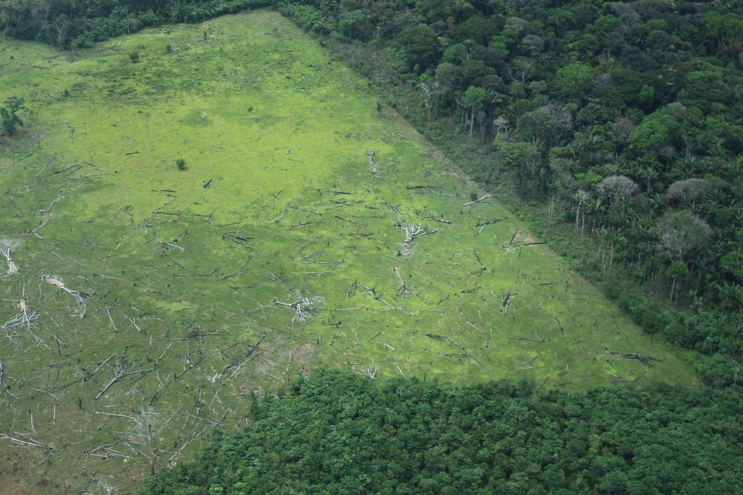 Deforestación habría disminuido en el segundo trimestre en Colombia hoy