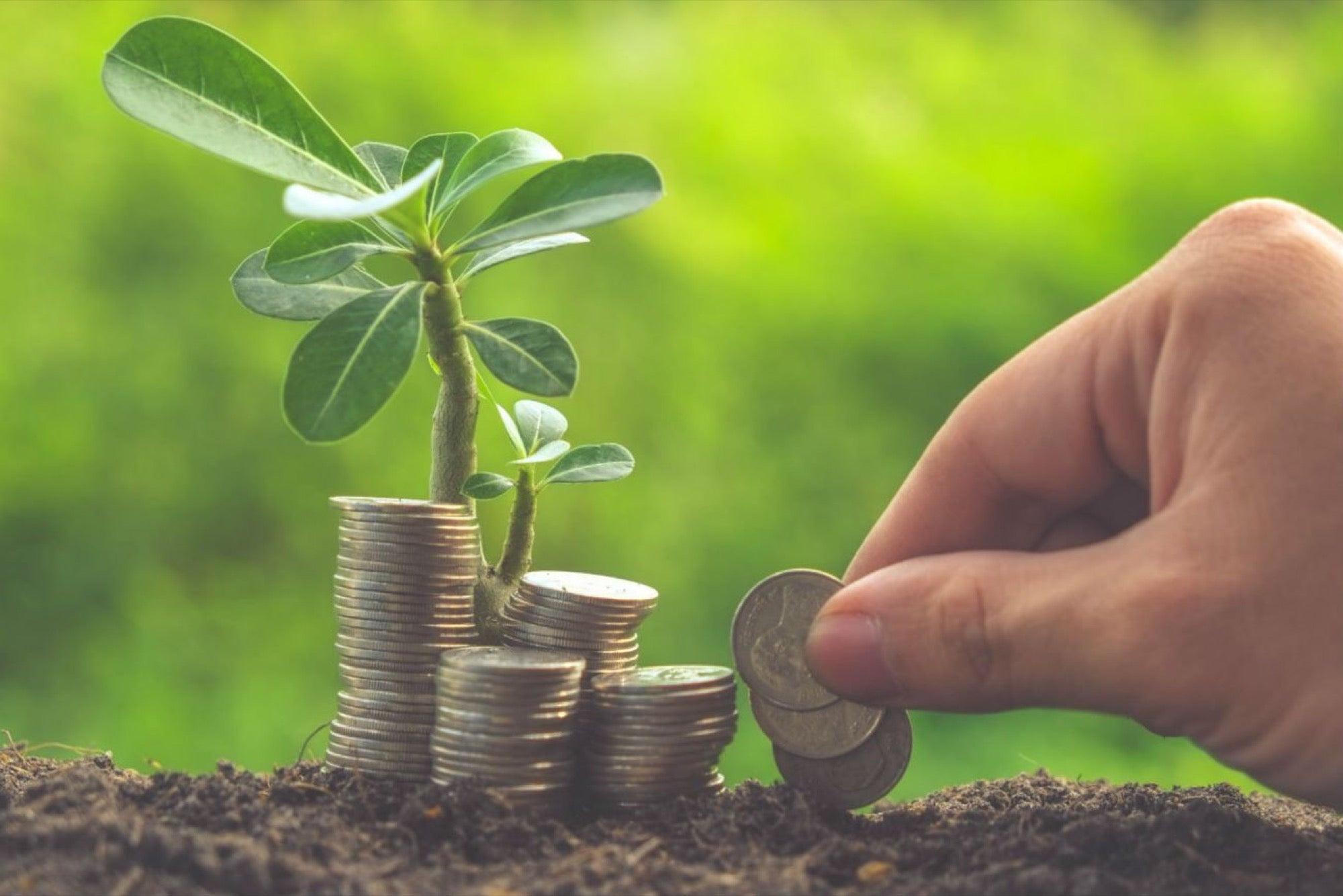Qué es el capital semilla y el capital emprendedor