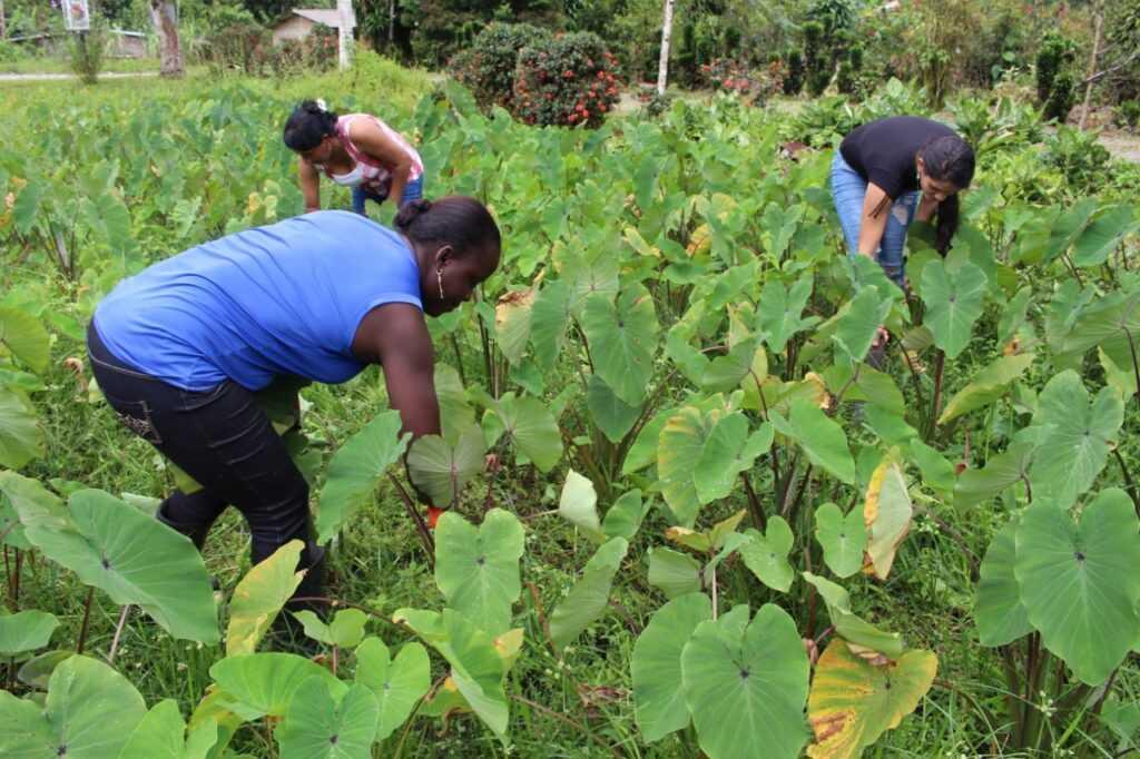 Comunidades de Buenaventura, Meta, Urabá y Caquetá le apuestan al agro
