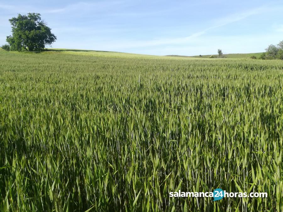 El futuro de la industria agroalimentaria: expertos en Ciencia y Tecnología, con doctoras de la USAL, apuestan por métodos innovadores en el Itacyl