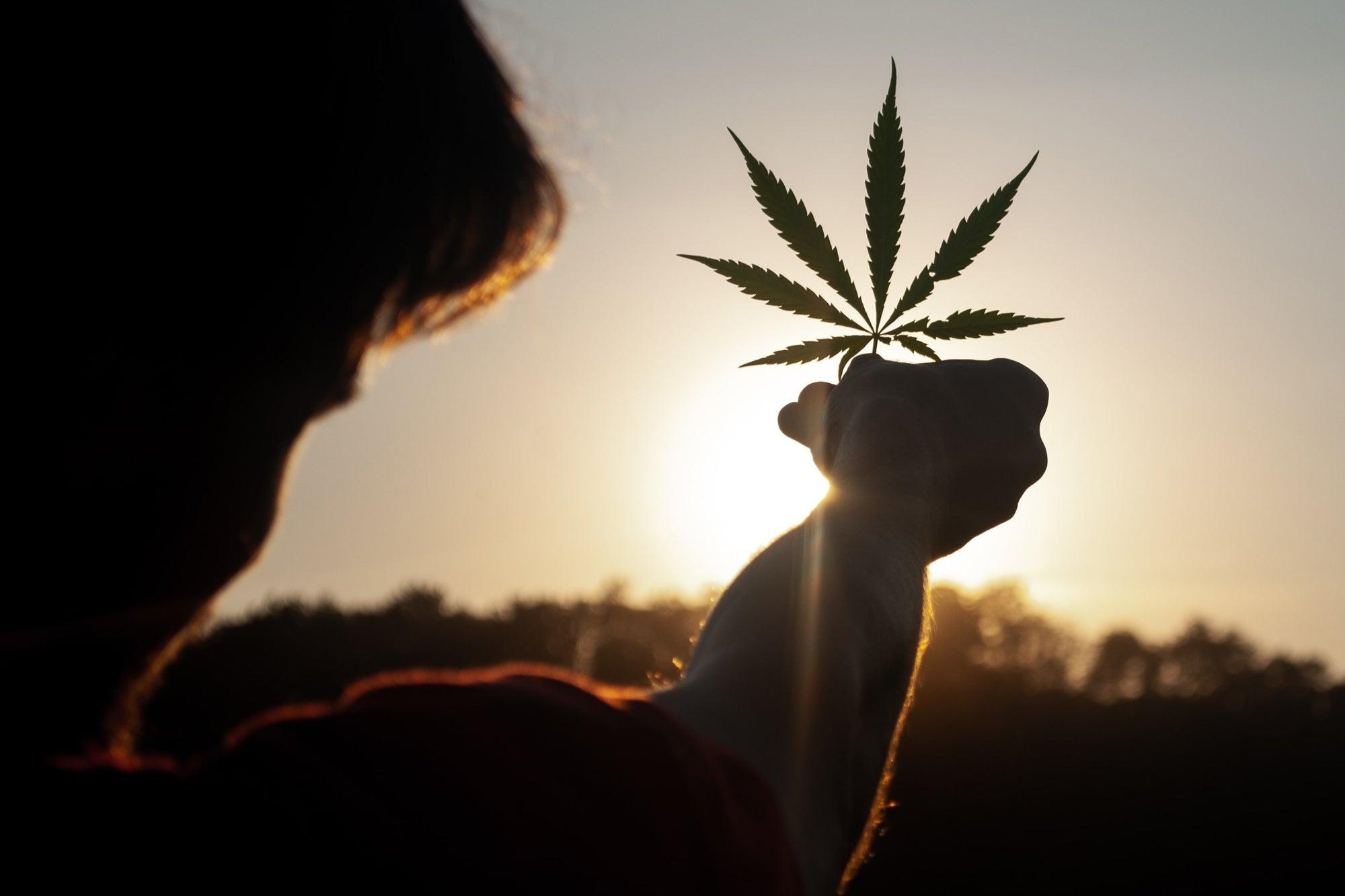 Hasta febrero sabremos si se aprueba o no la marihuana en México, confirmó AMLO