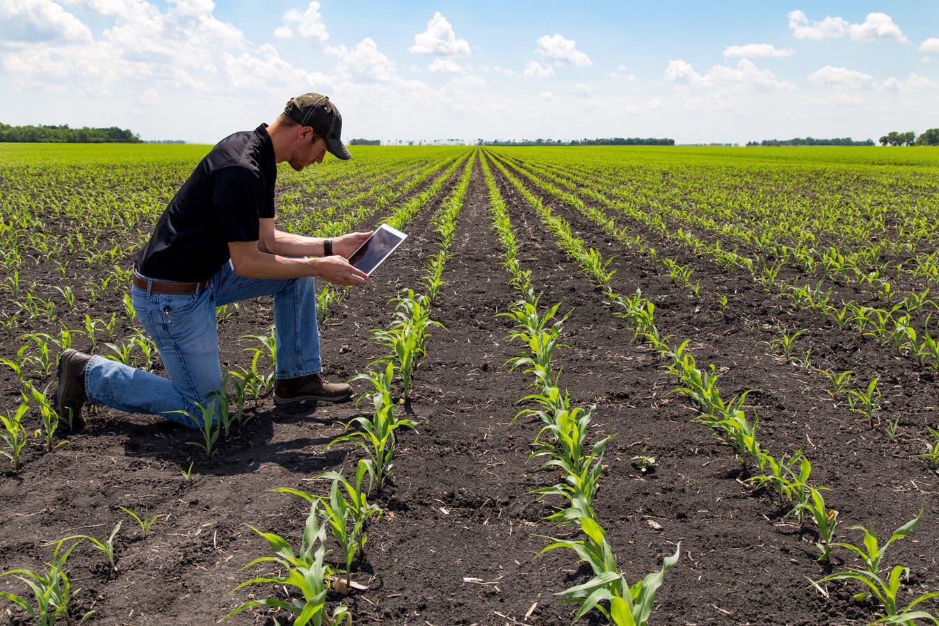 El uso de tecnologia está revolucionando el sector agropecuario