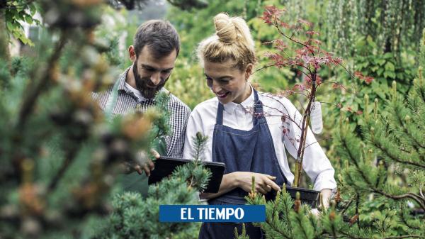 Tecnología para cuidar jardines en los hogares - Novedades Tecnología - Tecnología