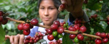 El café colombiano: precios y cosechas de un producto sobreviviente de la pandemia | Economía