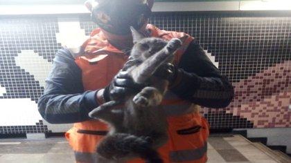 La denuncia de una usuaria alertó al personal del Metro (Foto: Twitter/MetroCDMX)