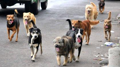 La situación de los perros callejeros en México es grave