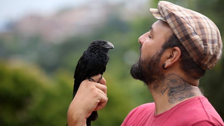 Noticias de Cali: Davis Travis, hombre que rescata a los animales en peligro - Cali - Colombia