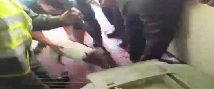 """""""Quieren que pague el pitbull en la cárcel"""": presunto agresor del perro que murió tras ser apuñalado"""