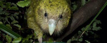 Crean una isla de alta tecnología para salvar al ave más extraña del mundo - Medio Ambiente - Vida