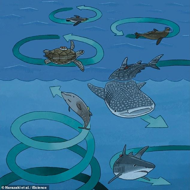 La impresión de este artista muestra el comportamiento circular de varias criaturas marinas grandes.