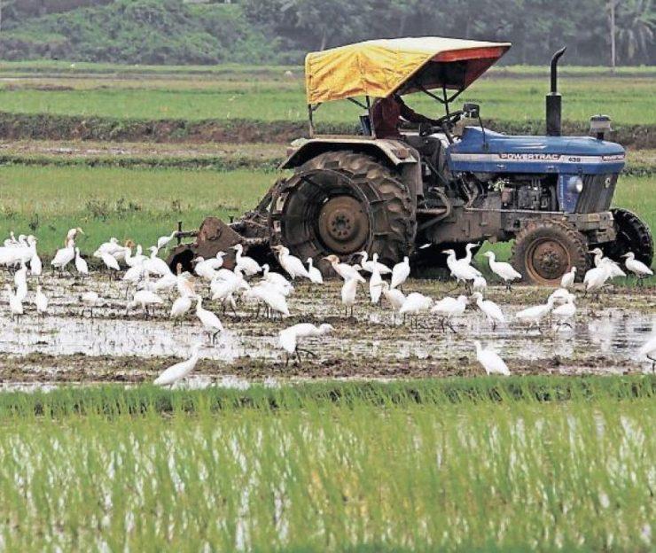 Gobierno lanza plan para programar las siembras de arroz | Economía