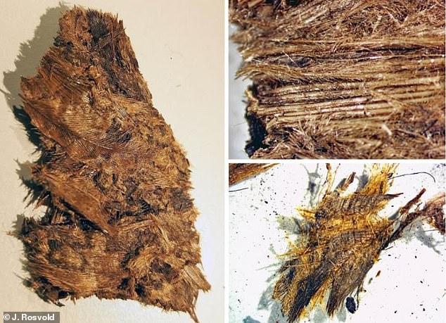 Plumas excavadas de una de las tumbas de un barco.  Están muy bien conservados, pero quebradizos, densamente empaquetados y enredados.