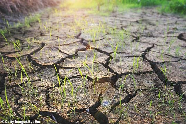 Según una nueva investigación, el cambio climático ha provocado una disminución del 21 por ciento en la productividad agrícola mundial en comparación con lo que sería si los patrones climáticos se mantuvieran donde estaban en 1961.