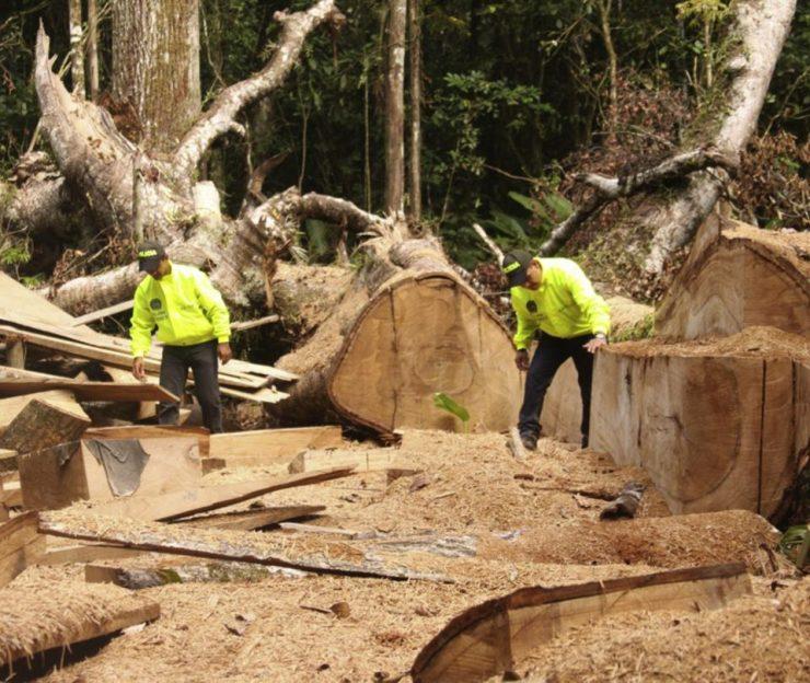 Facturación fraudulenta en comercio internacional de madera colombiana | Economía