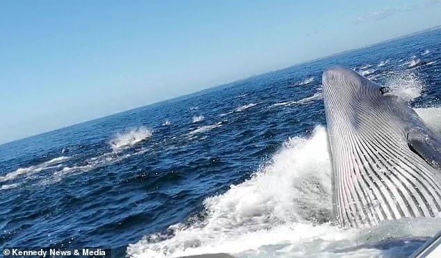 Gillian Gherbavaz, de 22 años, estaba filmando delfines comiendo sardinas frente a la costa de Sudáfrica cuando una ballena apareció de repente para tomar un bocado de pescado y golpear el bote en el que estaba.