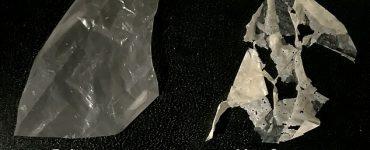 Los primeros plásticos verdaderamente biodegradables que se descomponen en solo unas pocas semanas cuando se exponen al calor y al agua han sido desarrollados por científicos.  En la imagen: el plástico modificado que contiene enzimas que comen poliéster (izquierda) se descompone en compost normal (derecha)