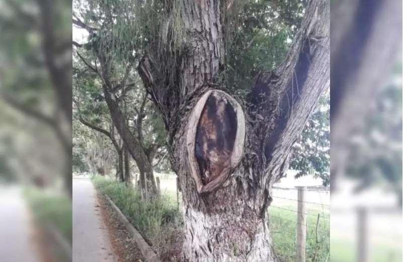 Una polémica se generó en Huila por una fotografía tomada en el municipio de Guadalupe, en la que creyentes aseguran que la imagen de Jesús apareció en un árbol. Según algunos, se trata de un milagro.