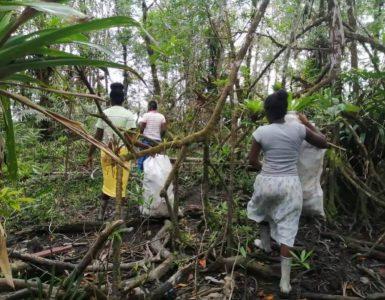 Jóvenes de la zona rural de Buenaventura se unieron para limpiar sus manglares