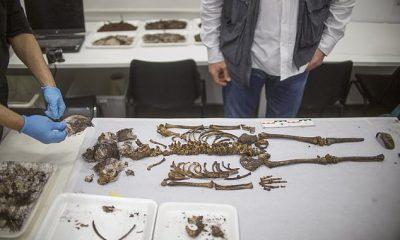 Los restos de una niña de 5 años fueron descubiertos en la capilla de correo del Real Alcázar de Sevilla, el palacio real en funcionamiento más antiguo de Europa.  Los expertos creen que era un miembro de la nobleza que murió en algún momento del siglo XIII o XIV.