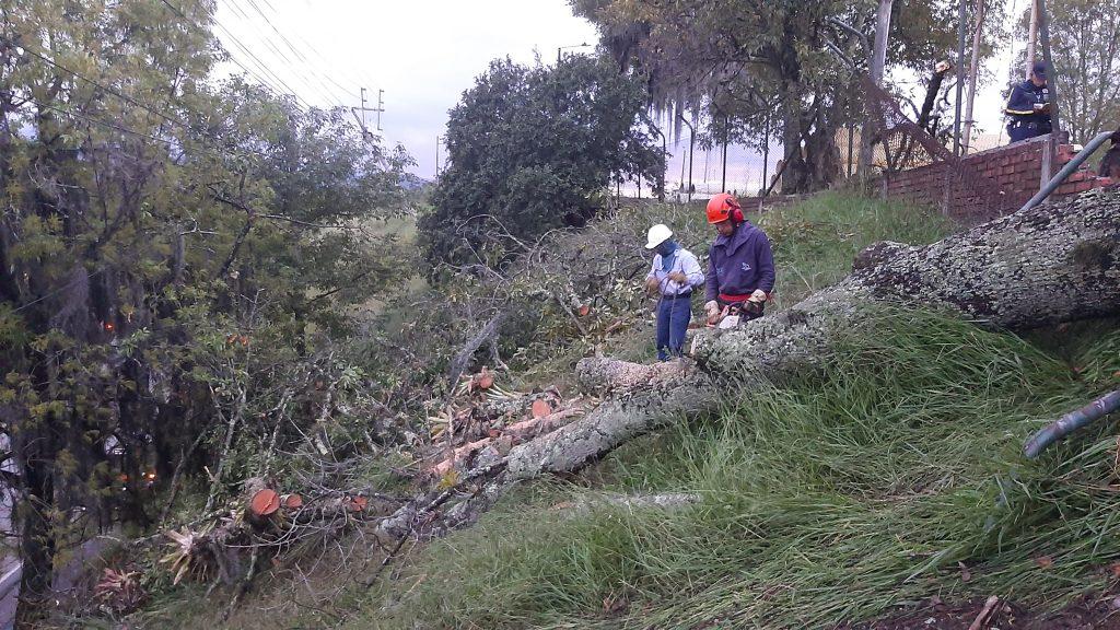 Caída de árbol causa ausencia del servicio de energía eléctrica en el Norte de Popayán