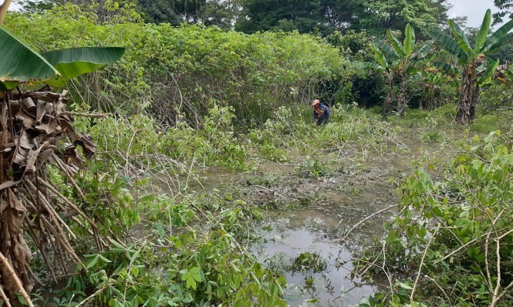Creciente de Río Guaviare destruyó cultivos en la vereda Los Cambulos