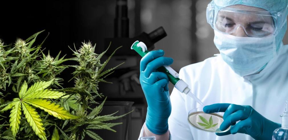 Inician primeros ensayos clínicos del Cannabis para tratar las migrañas