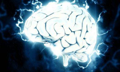 La clave del implante de cerebro estaría en la proteína de un pez antiguo