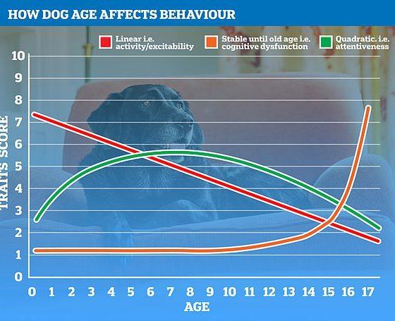En la imagen, cómo varias métricas alteran el comportamiento de un perro a lo largo del tiempo.  El verde muestra cómo se desarrolla el cerebro y luego comienza a declinar en la vejez;  el naranja muestra cómo algunos rasgos, como el deterioro cognitivo, aumentan exponencialmente en los años geriátricos de un perro;  el rojo muestra la lenta disminución de la actividad y la atención de un perro