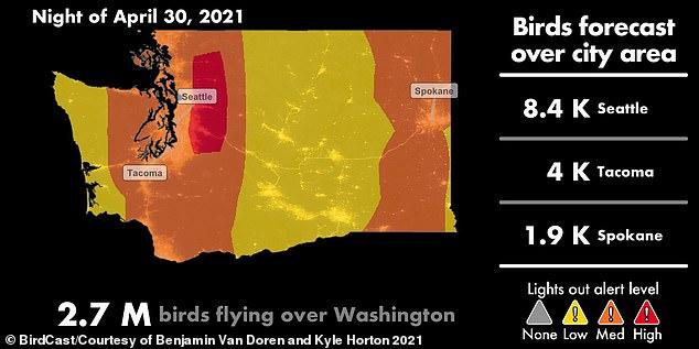 Se insta a los residentes del estado de Washington a atenuar las luces exteriores en preparación de más de 11.5 millones de aves migratorias que llenarán el cielo nocturno durante los próximos días.  Seattle está en alerta alta de 'Luces apagadas', que verá a más de 7,800 pájaros sobrevolar el viernes por la noche