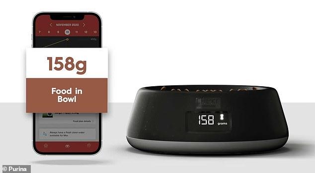 Purina ha presentado un nuevo cuenco inteligente para perros que puede controlar los hábitos alimenticios de su perro y brindar recomendaciones dietéticas.