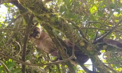 Alerta en Guachaves: aparecieron dos pumas y hay temor por ataques a las especies