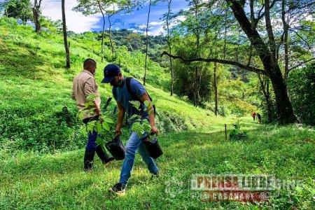 Cormacarena le apuesta a sembrar un millón 250 mil árboles este año en el Meta