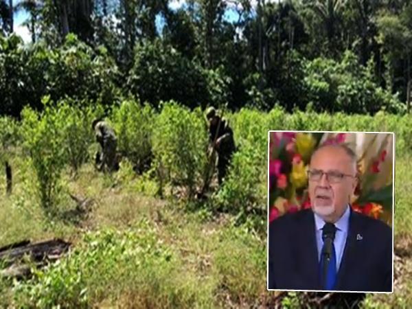 Desde Naciones Unidas revelan que en Nariño se redujeron los cultivos de uso ilícito
