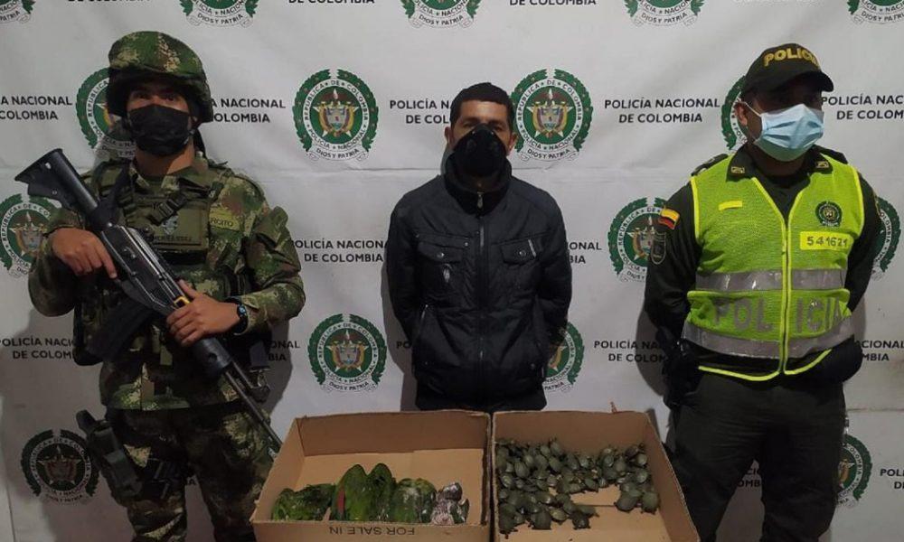 En el Tolima dieron fuerte golpe contra el tráfico de fauna silvestre