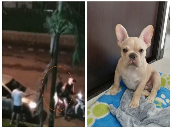 En menos de un mes se robaron a dos perros en Cali, esta vezocurrió en la autopista sur
