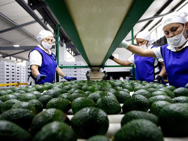 Exportaciones de café, frutas y moda, productos más afectados por bloqueos   Paro en Colombia   Finanzas   Economía