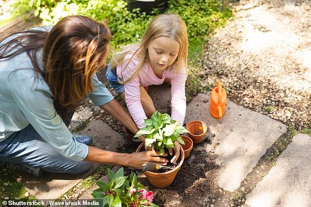 Los jardineros británicos están recurriendo a plantas más exóticas como los higos, las vides e incluso los plátanos debido al clima más cálido y a estar atrapados en el Reino Unido debido al cierre.  Imagen de archivo