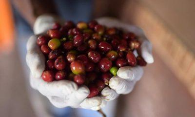 Precios altos de café y petróleo: por qué favorecería a Colombia   Finanzas   Economía